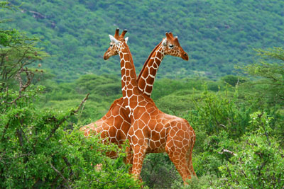 South Africa Packages | South Africa Travel | South Africa DMC
